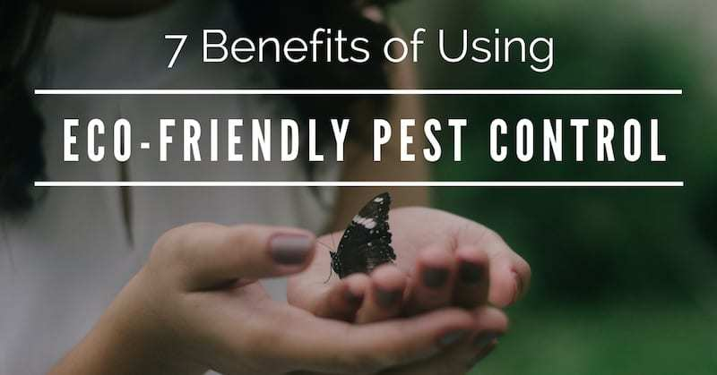 Eco-Friendly Pest Control, ByeByeBugs