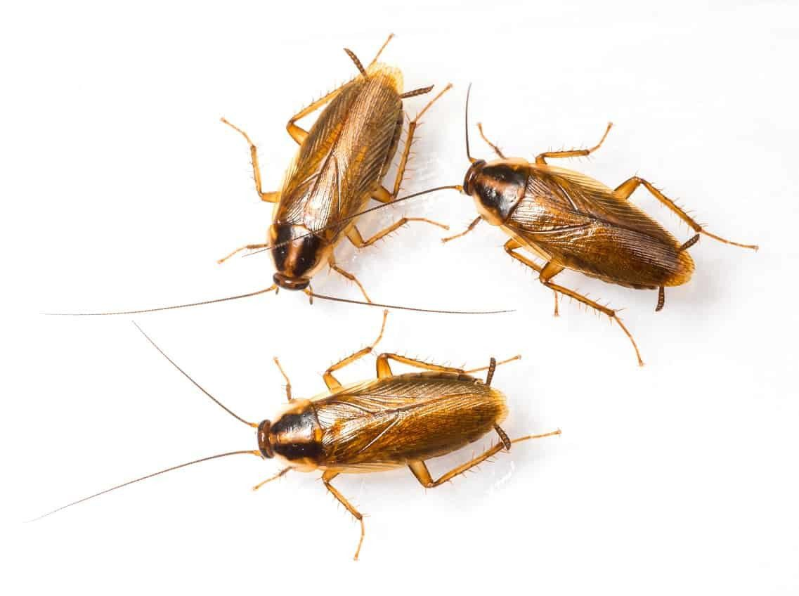 Exterminator For Roaches Bradenton, ByeByeBugs